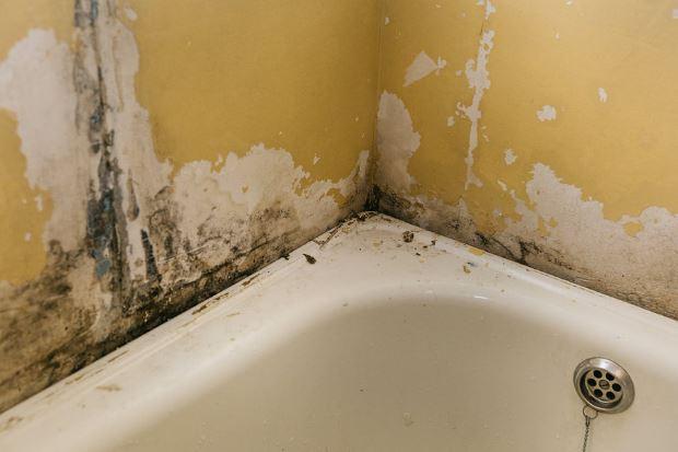 mold removal victoria bc